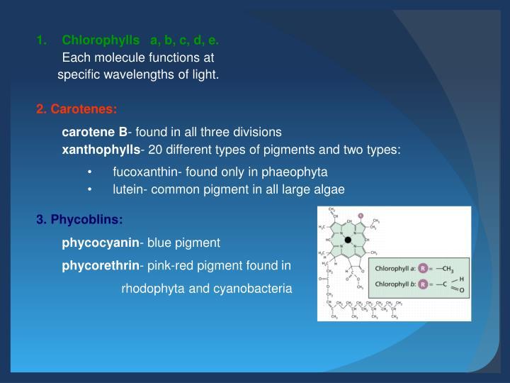 Chlorophylls   a,