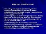 w grzyca cysticercosis1
