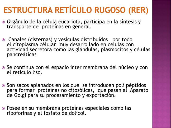 estructura Retículo rugoso (RER)