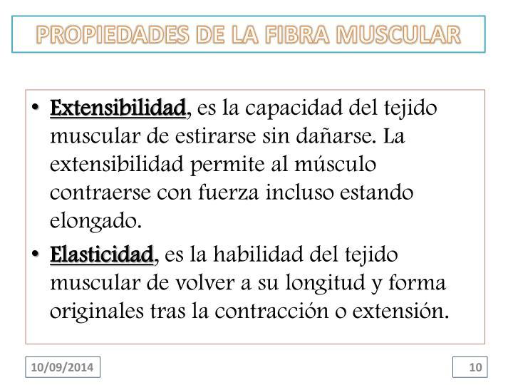 PROPIEDADES DE LA FIBRA MUSCULAR