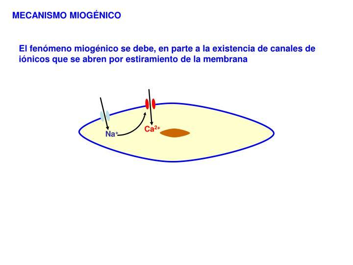 MECANISMO MIOGÉNICO