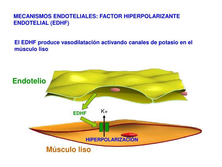 MECANISMOS ENDOTELIALES: FACTOR HIPERPOLARIZANTE ENDOTELIAL (EDHF)