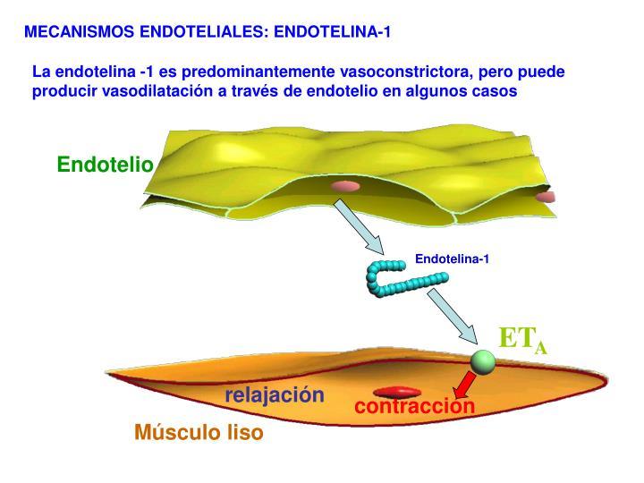 Endotelina-1