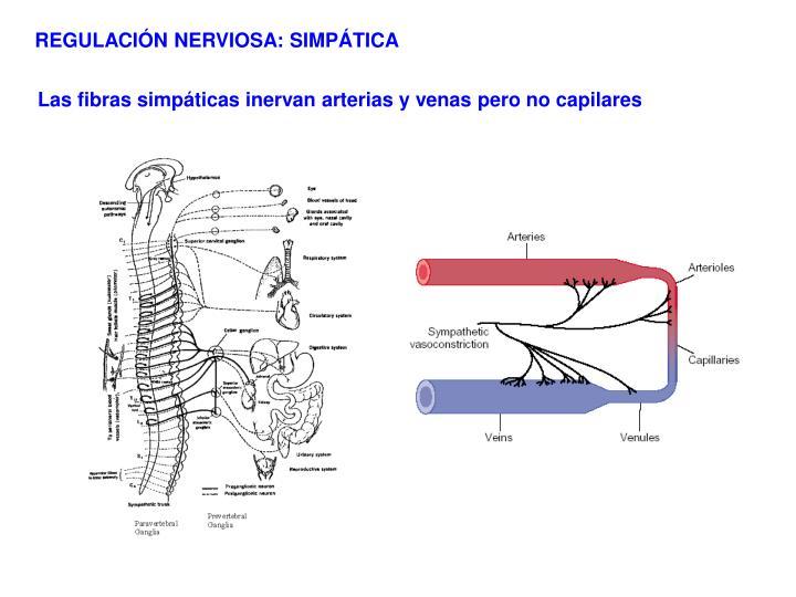 REGULACIÓN NERVIOSA: SIMPÁTICA