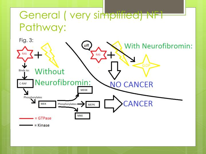 General ( very simplified) NF1 Pathway: