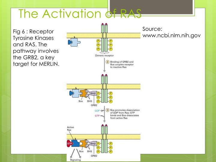 The Activation of RAS