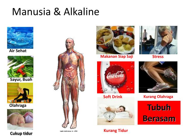 Manusia & Alkaline