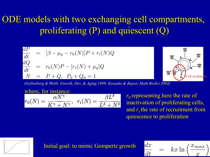 ODE models with two exchanging cell compartments,