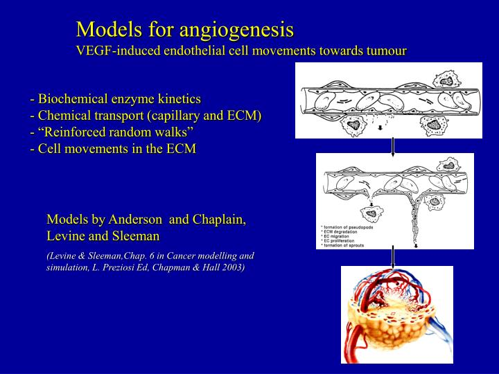 Models for angiogenesis