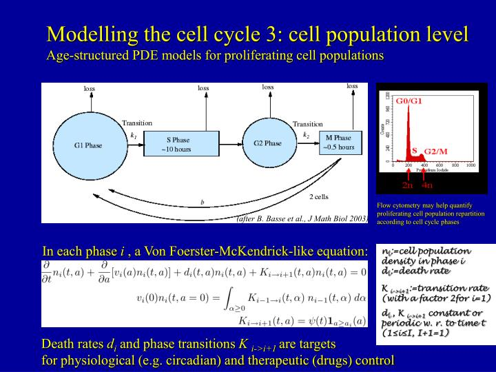Modelling the cell cycle 3: cell population level