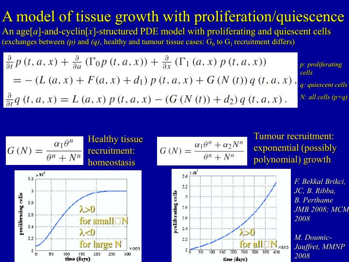 A model of tissue growth with proliferation/quiescence