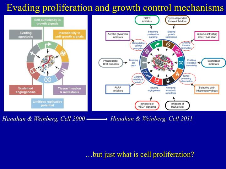 Evading proliferation and growth control mechanisms