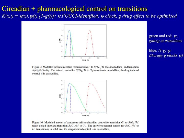 Circadian + pharmacological control on transitions