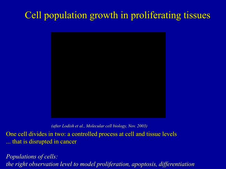 Cell population growth in proliferating tissues