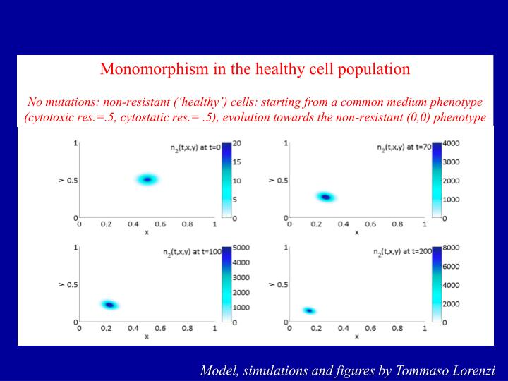 Monomorphism in the healthy cell population
