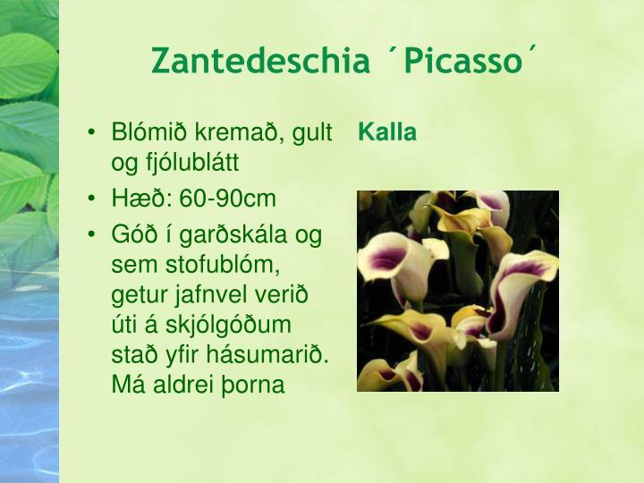 Blómið kremað, gult  og fjólublátt