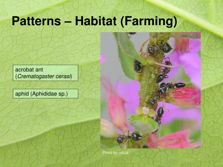 Patterns – Habitat (Farming)