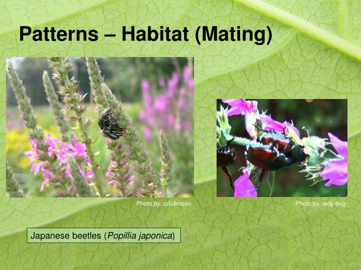 Patterns – Habitat (Mating)