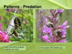 patterns predation
