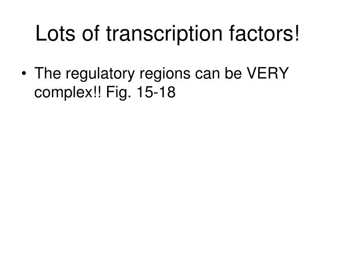 Lots of transcription factors!