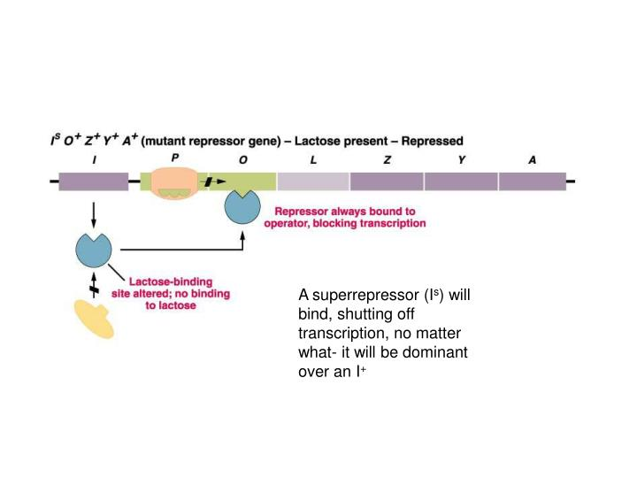 A superrepressor (I