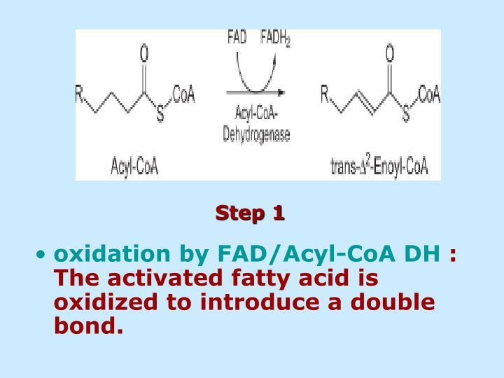 oxidation by FAD/Acyl-CoA DH