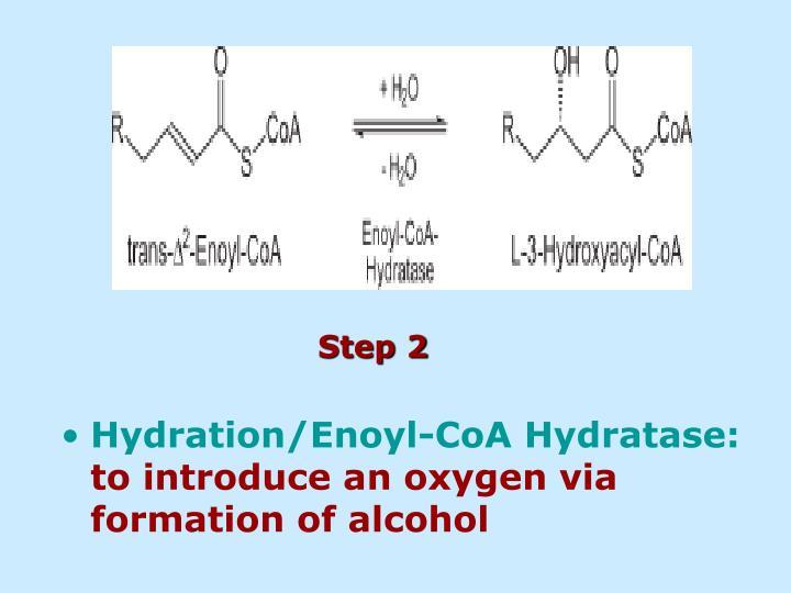 Hydration/Enoyl-CoA Hydratase: