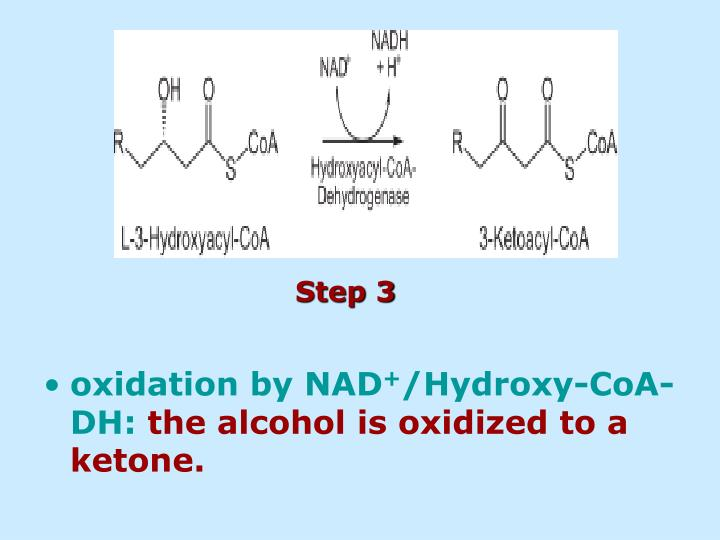 oxidation by NAD