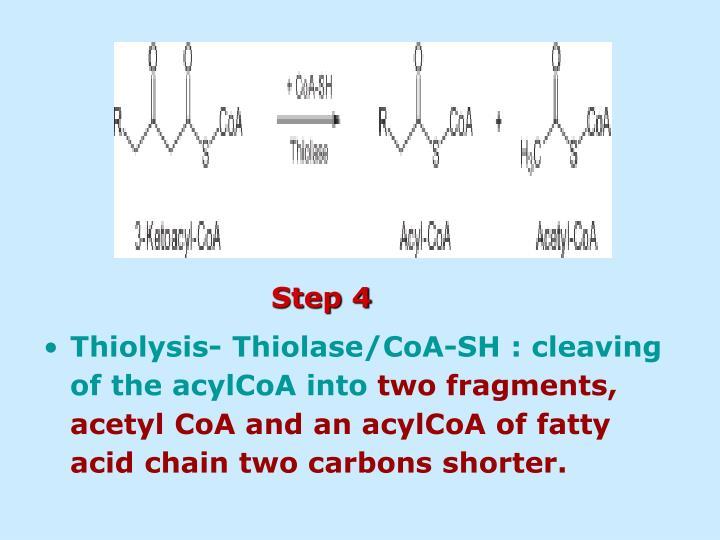 Thiolysis- Thiolase/CoA-SH : cleaving of the acylCoA into