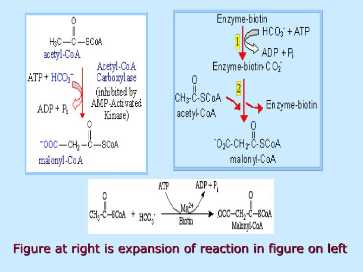 Figure at right is expansion of reaction in figure on left