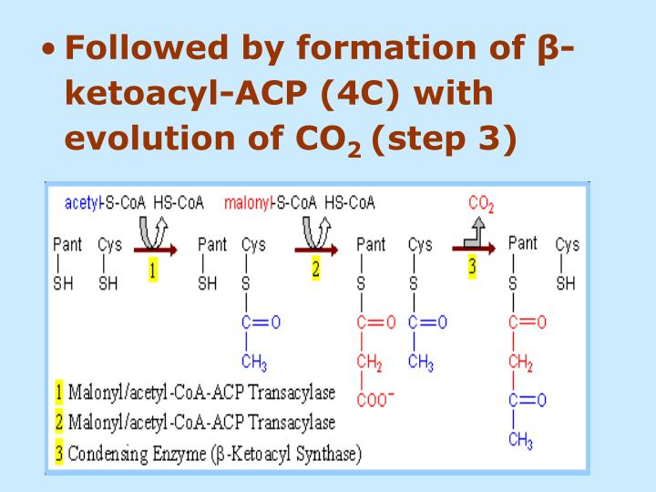 Followed by formation of