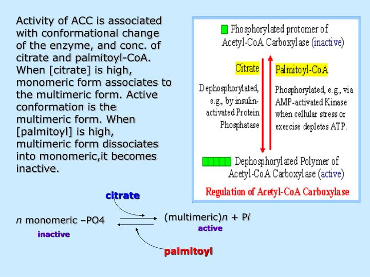 Activity of ACC is associated with conformational change of the enzyme, and conc. of citrate and palmitoyl-CoA. When [citrate] is high, monomeric form associates to the multimeric form. Active conformation is the multimeric form. When [palmitoyl] is high, multimeric form dissociates into monomeric,it becomes inactive.