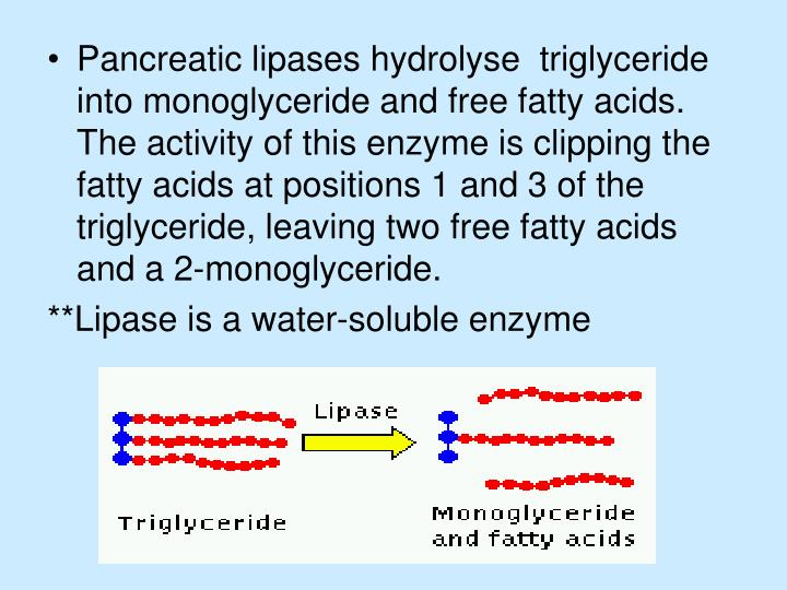 Pancreatic lipases hydrolyse  triglyceride into monoglyceride and free fatty acids. The activity of this enzyme is clipping the fatty acids at positions 1 and 3 of the triglyceride, leaving two free fatty acids and a 2-monoglyceride.