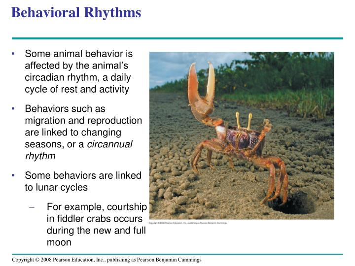 Behavioral Rhythms