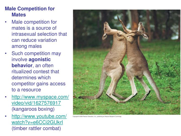 Male Competition for Mates