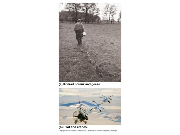 (a) Konrad Lorenz and geese