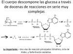 el cuerpo descompone las glucosa a trav s de docenas de reacciones en serie muy complejas