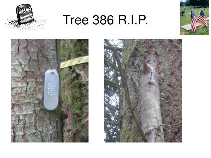 Tree 386 R.I.P.