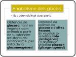 anabolisme dels gl cids