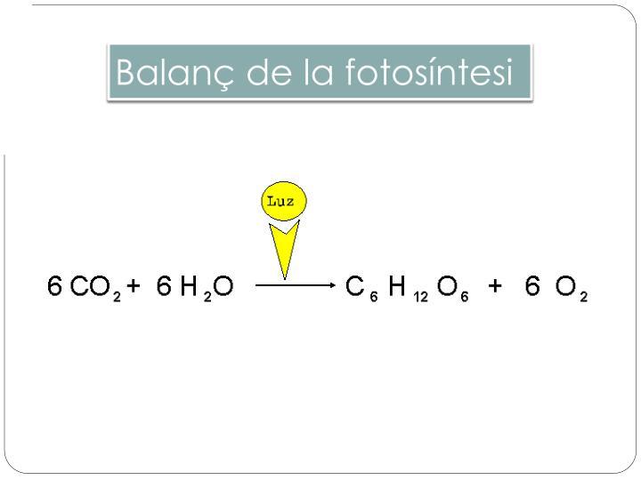 Balanç de la fotosíntesi