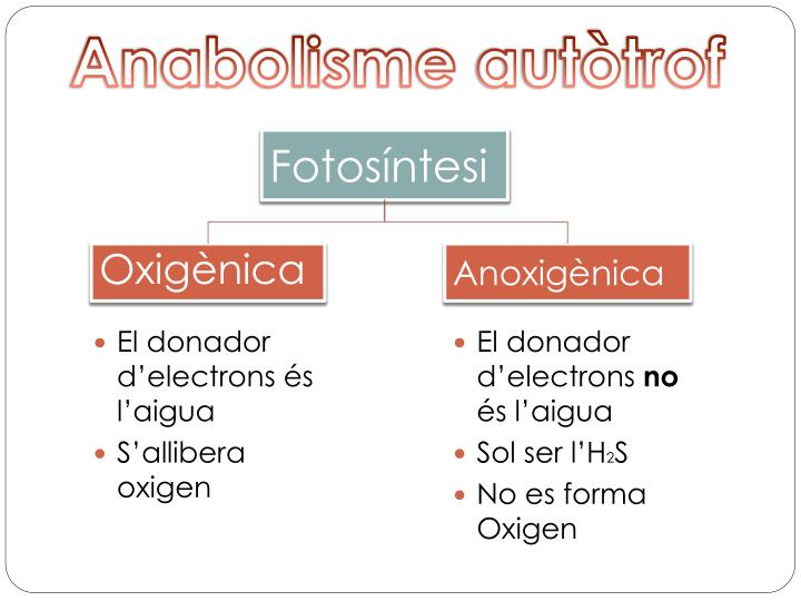 Anabolisme