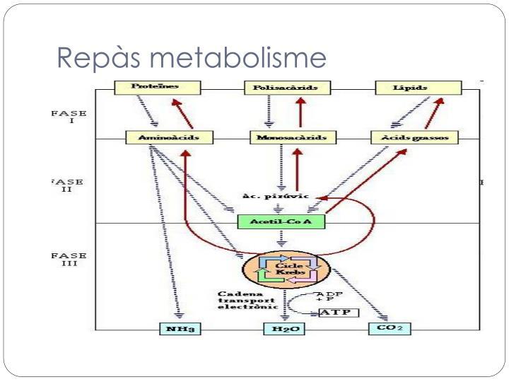 Repàs metabolisme