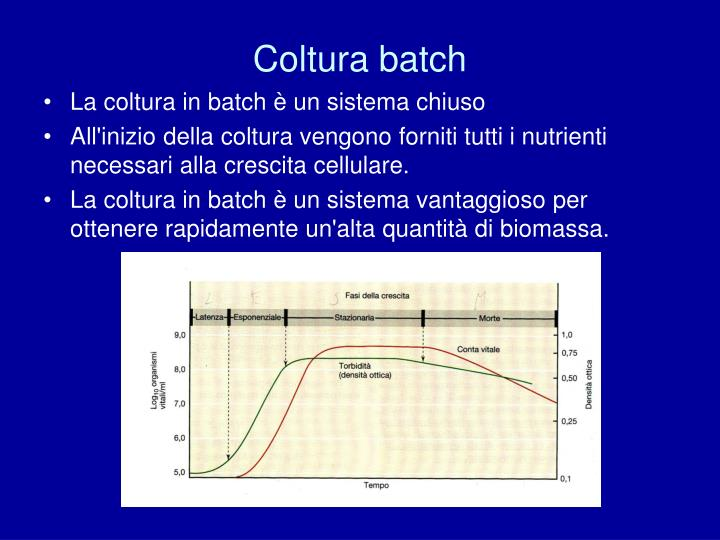 Coltura batch