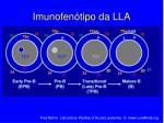 imunofen tipo da lla