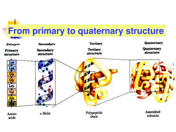 From primary to quaternary structure