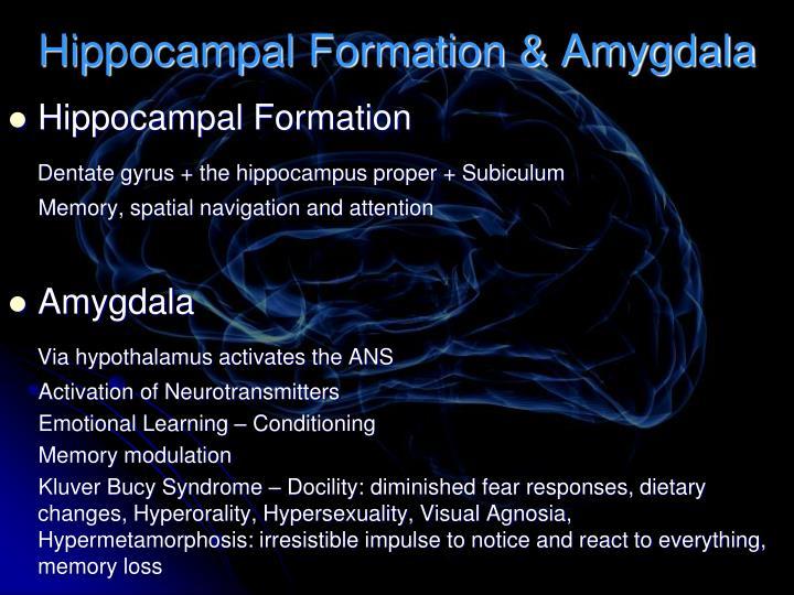 Hippocampal Formation & Amygdala
