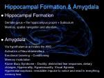 hippocampal formation amygdala