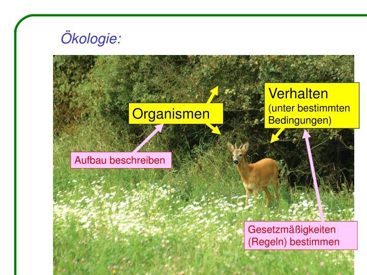 Ökologie:
