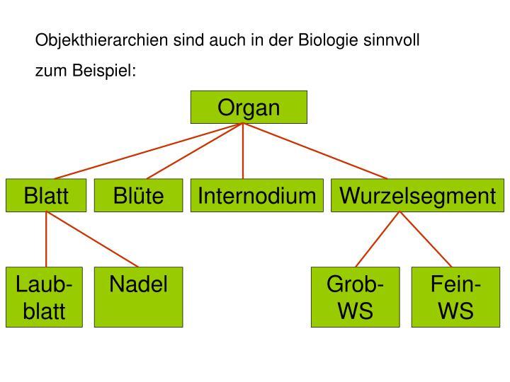 Objekthierarchien sind auch in der Biologie sinnvoll