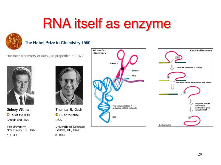 RNA itself as enzyme